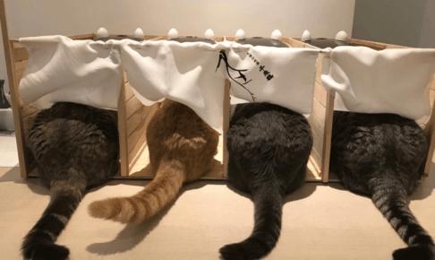 餌を分けて食べる猫