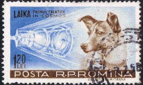 宇宙に行った犬-ライカ