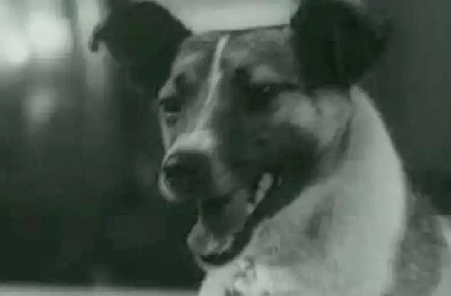 ライカ-宇宙犬