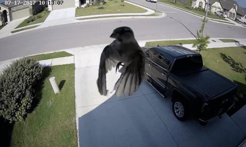 宙を浮く鳥