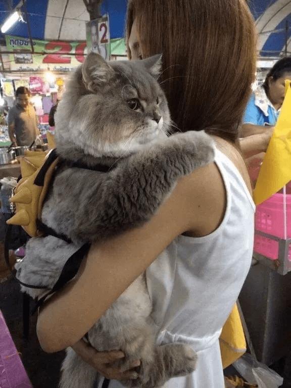太った猫-抱っこ