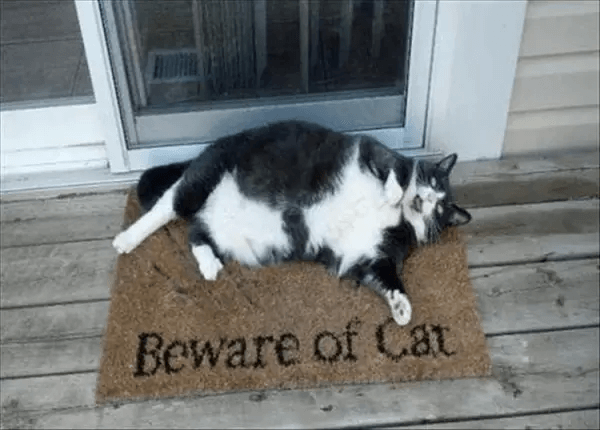 牛のような猫
