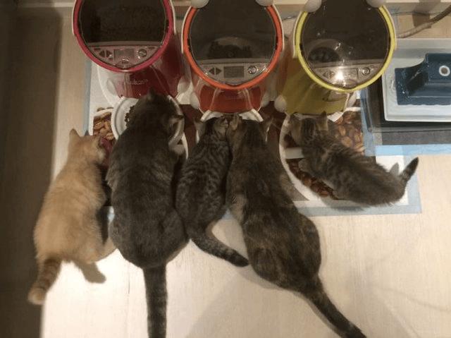 猫達が餌を食べる様子