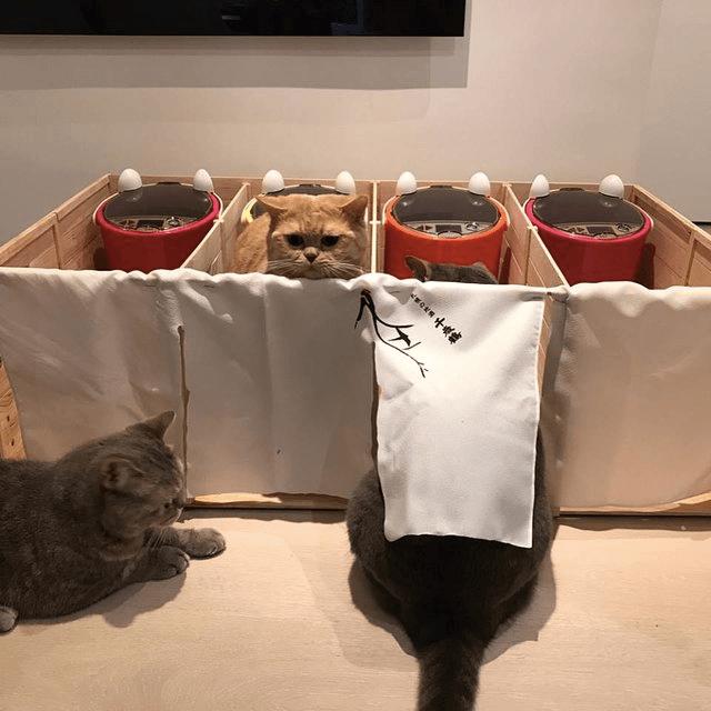 猫-餌-パーティション