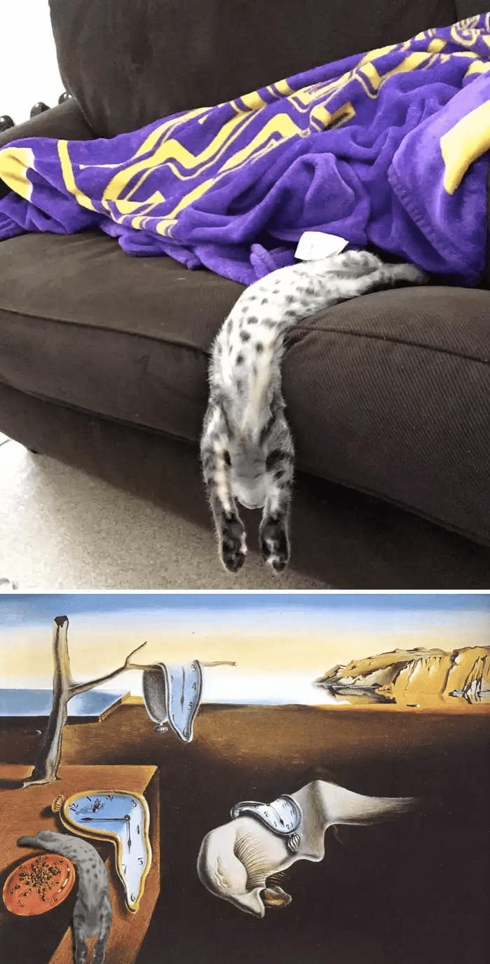 猫-ソファ-フォトショップ