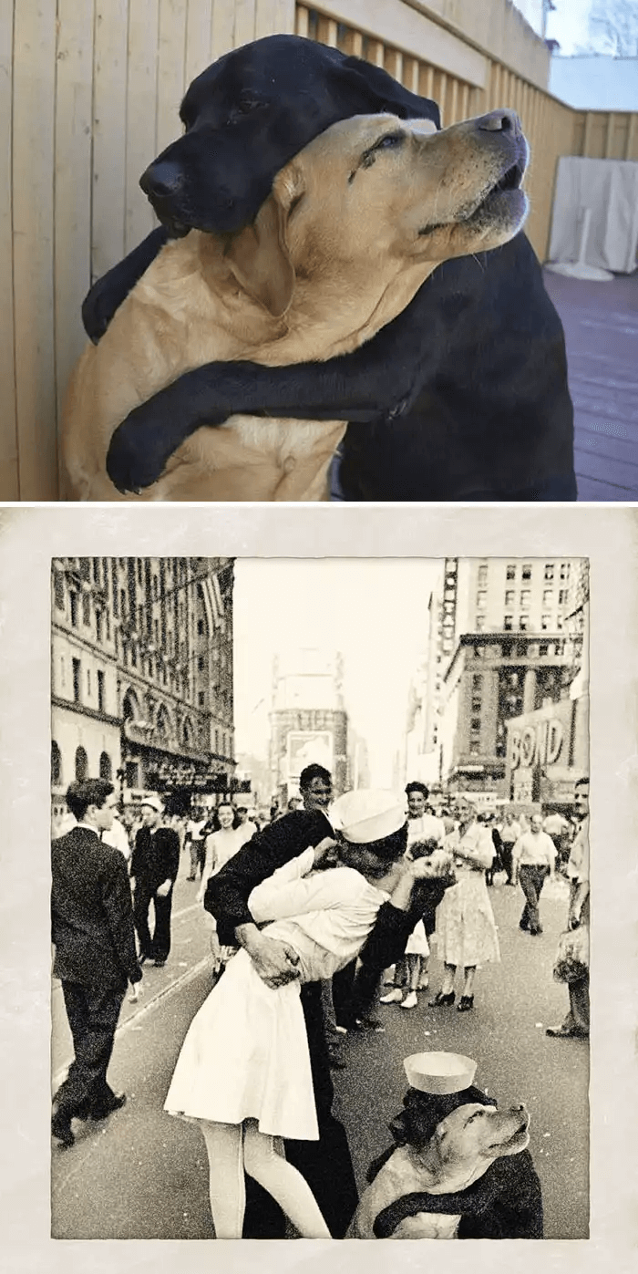 犬の抱擁-フォトショップ