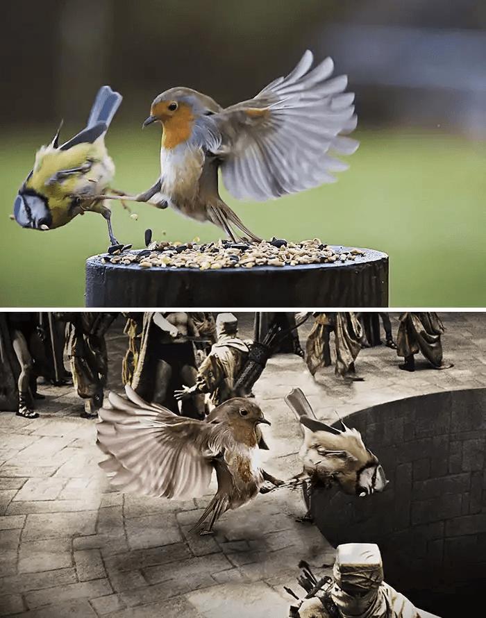 蹴り飛ばす鳥-フォトショップ