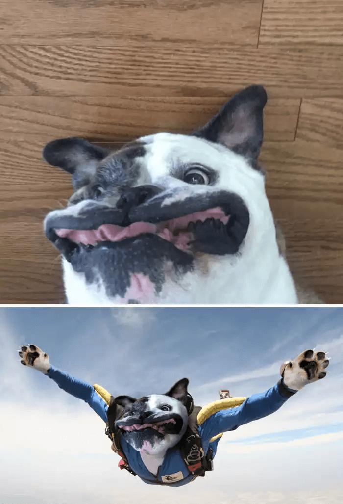 フォトショップ-犬のダイブ