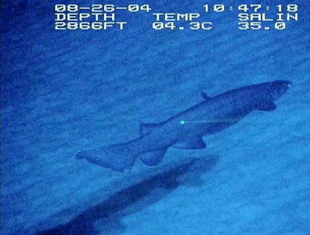 ラブカ-深海での撮影
