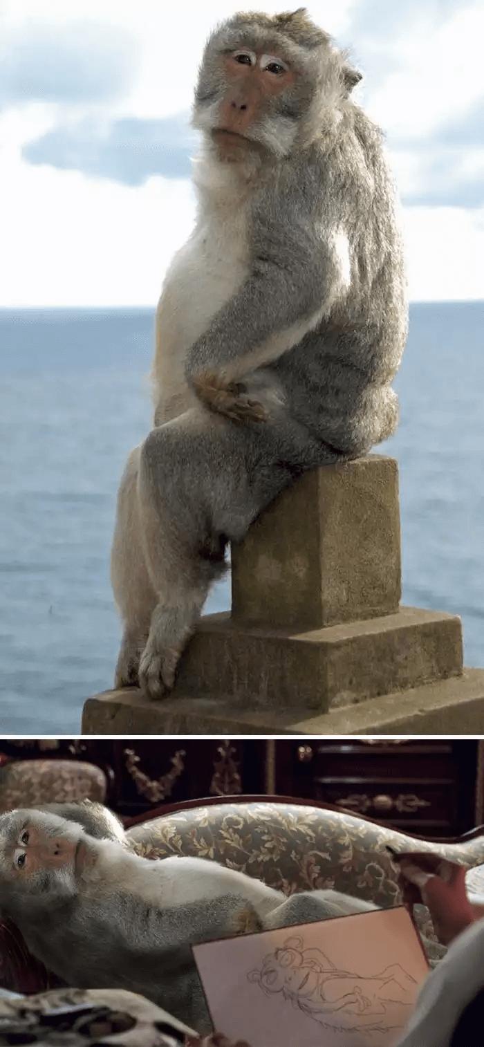 サル-ヌード