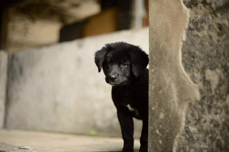 廃墟にいた犬