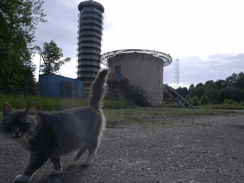 廃墟のネコ