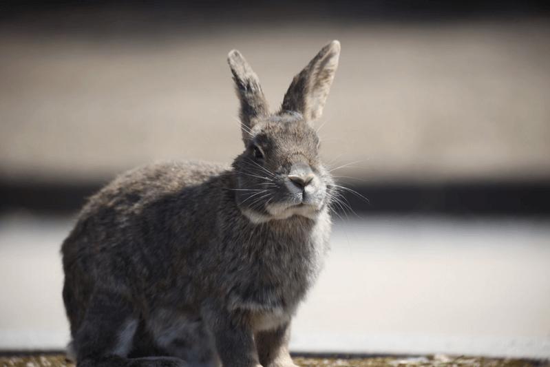 廃墟のウサギ