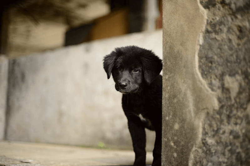 廃墟で見つけた可愛い犬