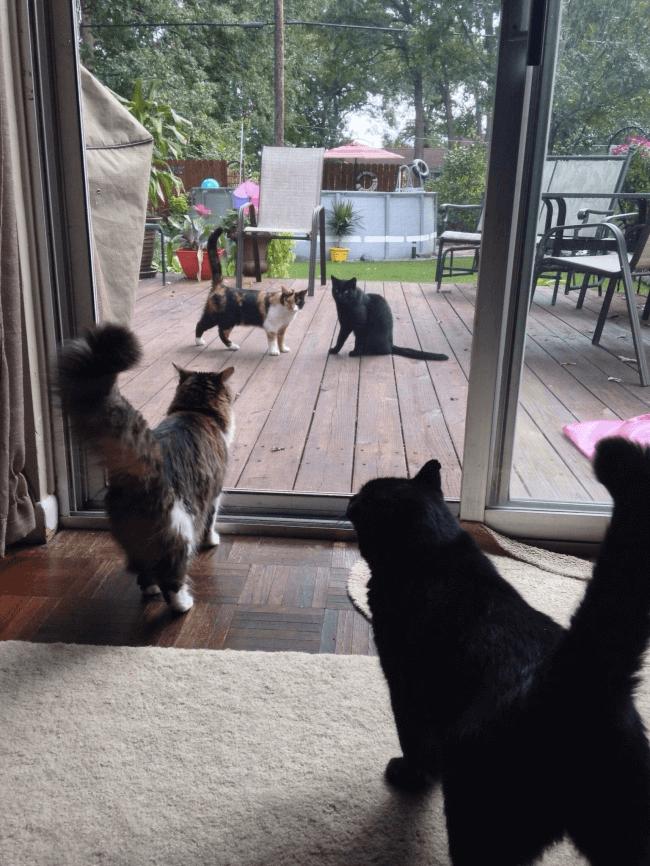 そっくりな猫たち