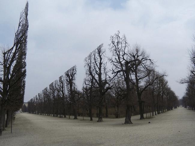 綺麗に同じようにカットされた木々