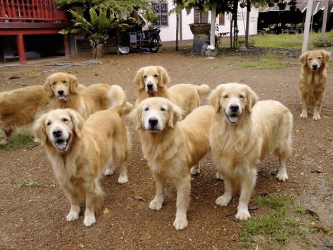 同じ顔の犬達の写真