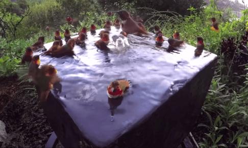 ハチドリの給水場