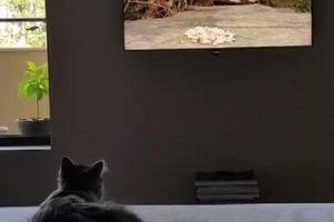 テレビに飛びかかる猫