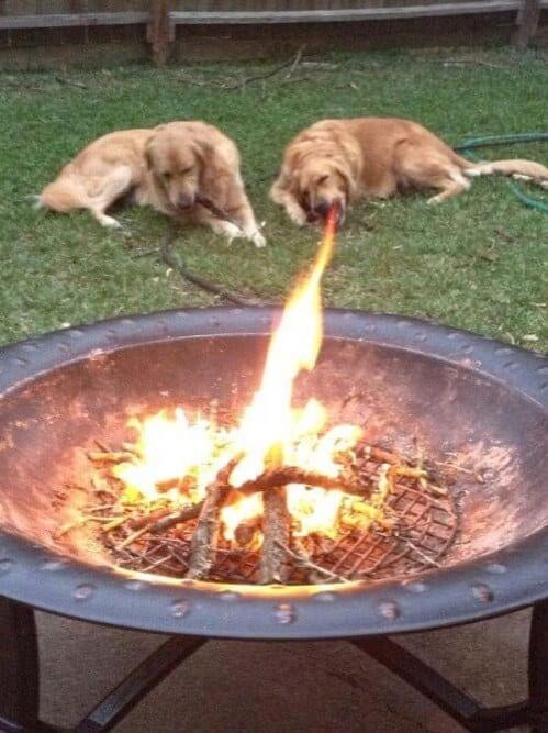 火を噴いているような犬