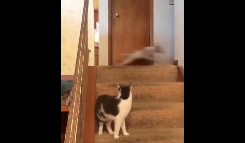 階段で喧嘩する犬と猫