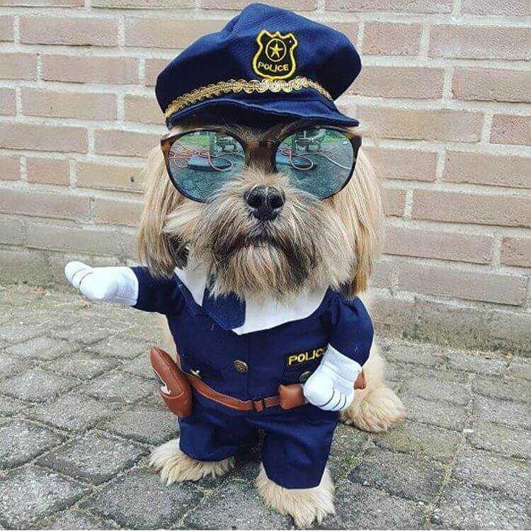 ハロウィンに仮装した犬
