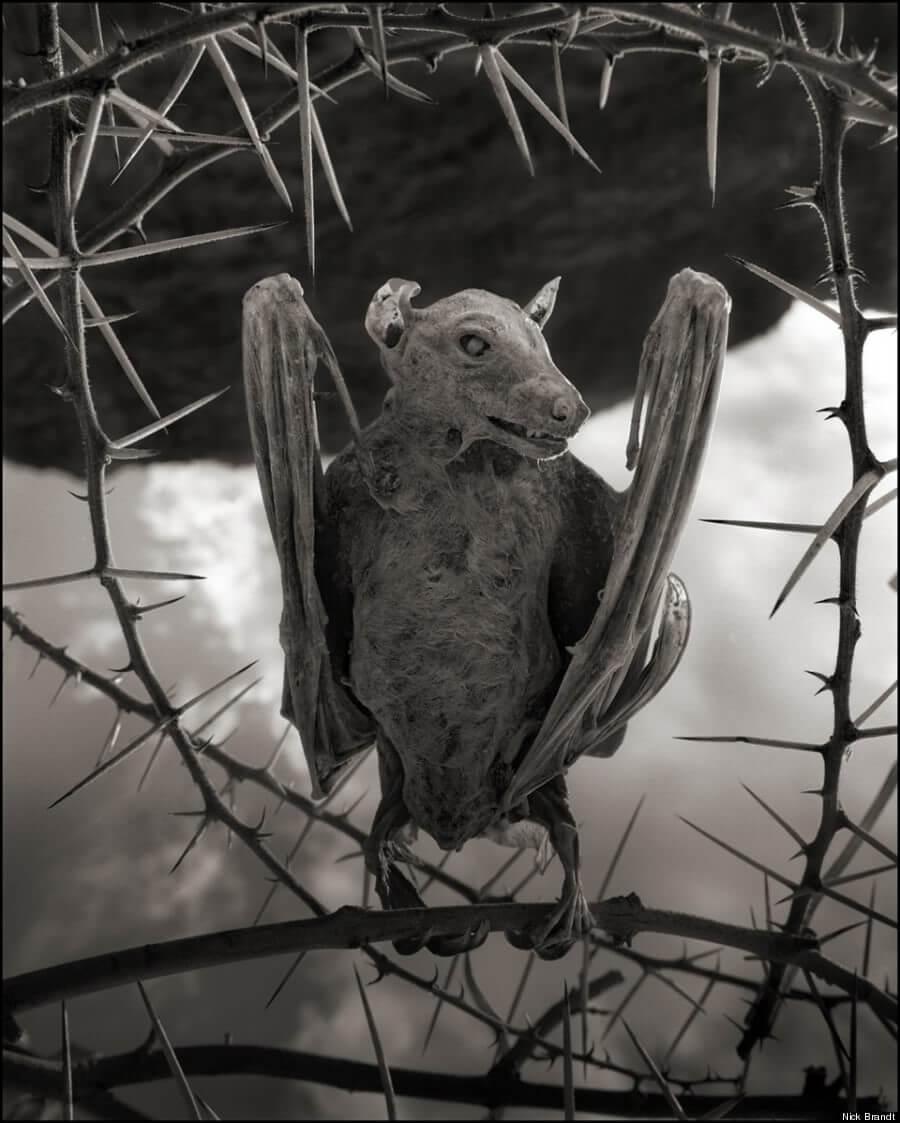 ナトロン湖の石炭化したコウモリ
