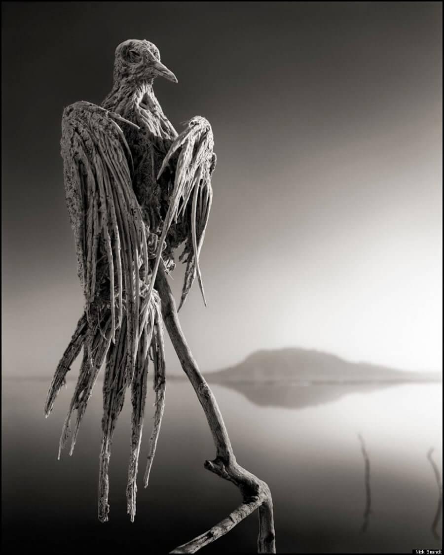 ナトロン湖の石炭化した鳩