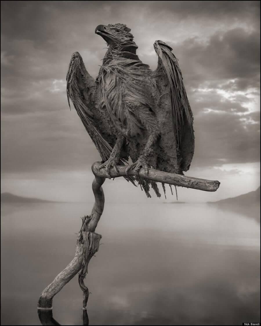 ナトロン湖の石炭化した鷹