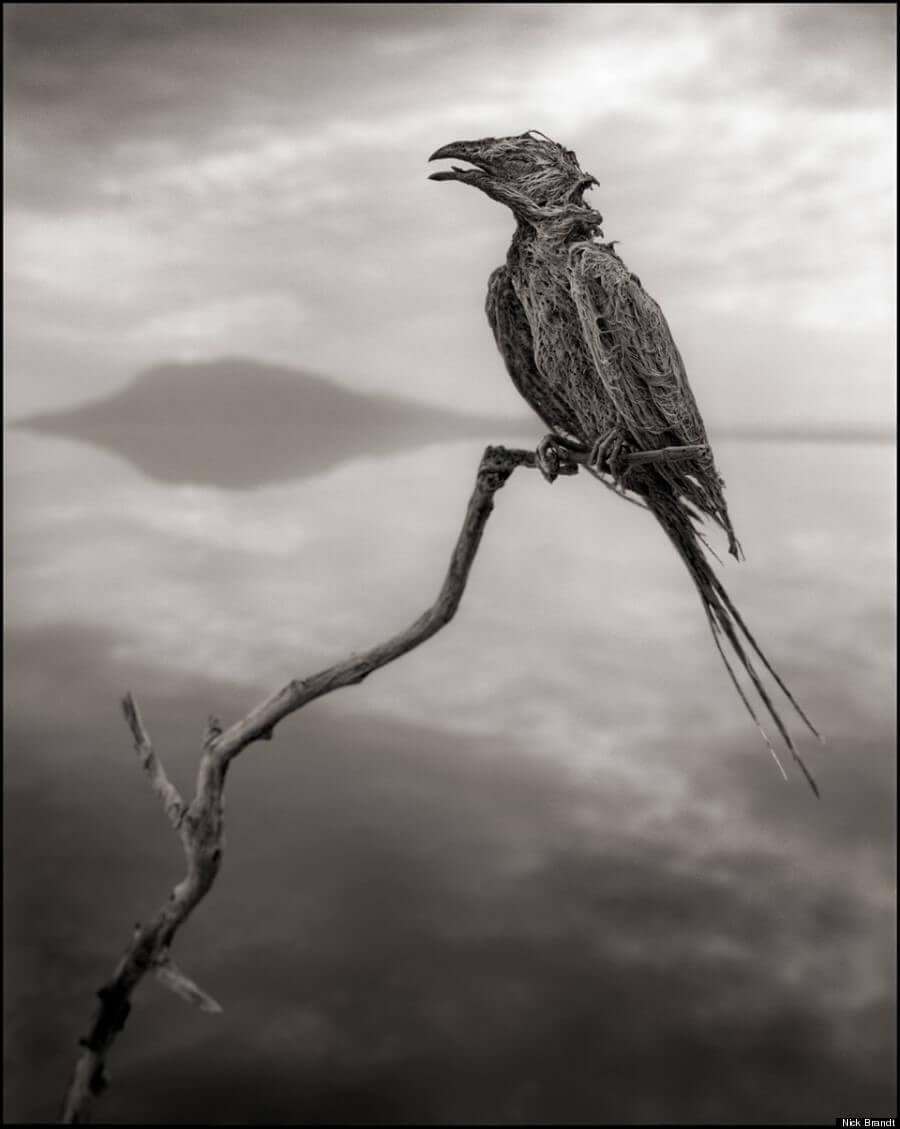 ナトロン湖の動物