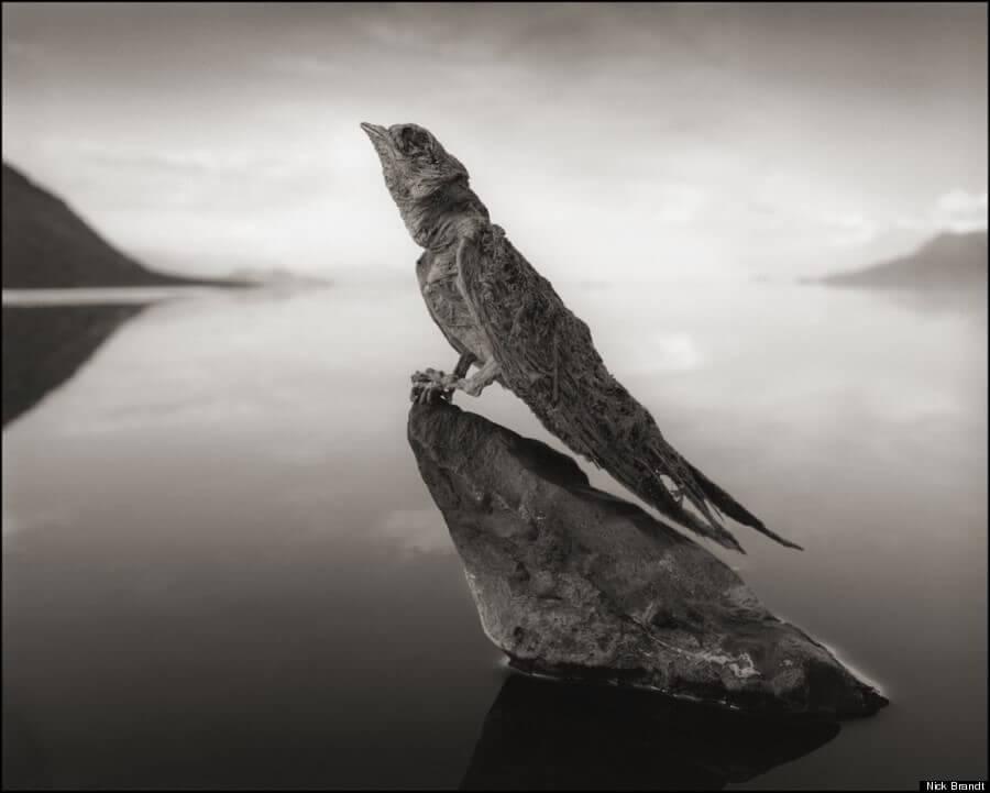 ナトロン湖の鳥