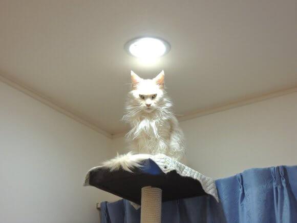 もののけ姫のモロにそっくりな猫