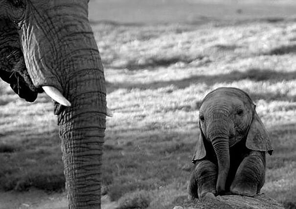 赤ちゃんゾウ
