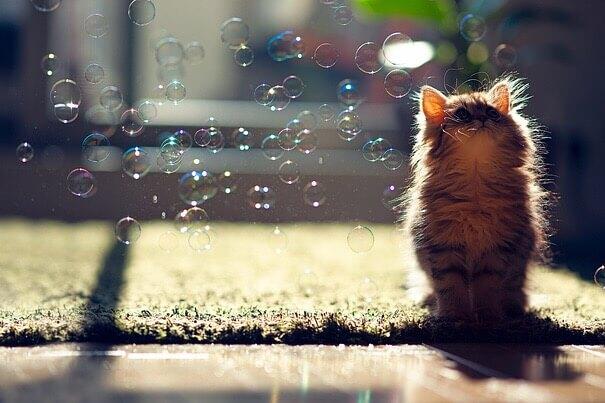 子猫とシャボン玉
