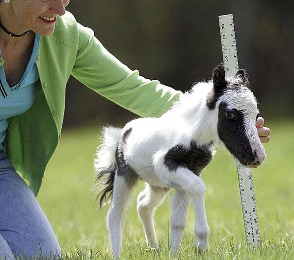 赤ちゃん馬
