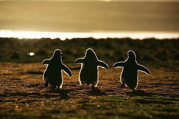赤ちゃんペンギン3匹