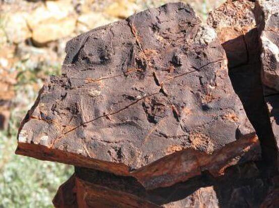 3億5千年前の最初の化石