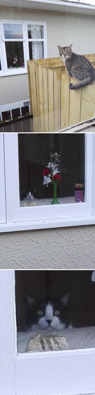 よーく見たら2匹の猫が撮れていた瞬間