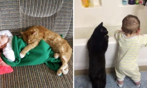 猫と子供の仲良し写真