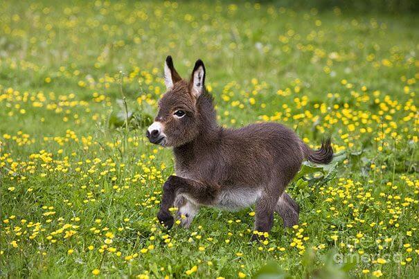 可愛い赤ちゃんロバ