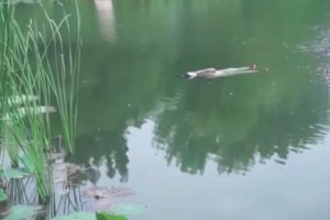湖に落ちてしまった中国のおばあちゃん