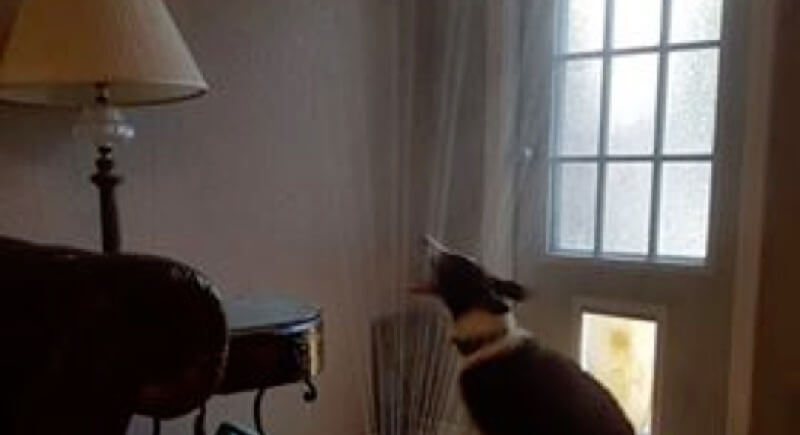 スプリンクラーで遊ぶ犬