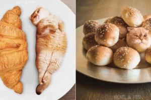 食べ物と猫