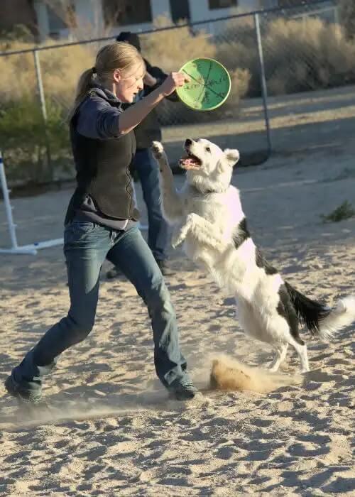 ギネス記録-犬-芸