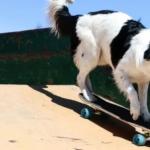 もう別次元…。1分間に49個もの高速芸を披露する犬ヒーローくんがギネス記録に認定へ