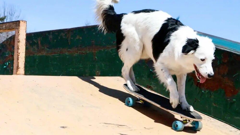 犬の芸によるギネス記録
