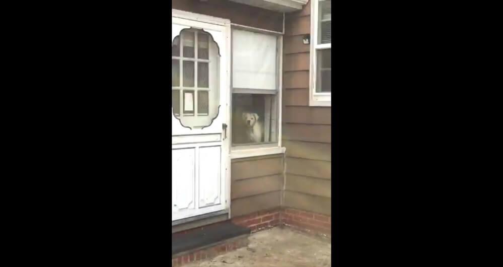 完璧な番犬