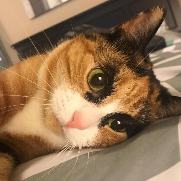 眉毛がカッコいい猫