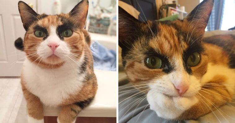 眉毛がかっこいいイケメン猫