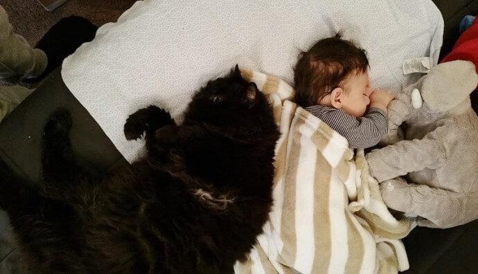 赤ちゃんを見守る猫ちゃん